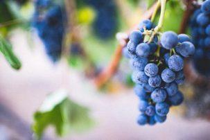 Vineyards ,Free Photo,Fruits