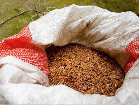 الأرز الأحمر , Red rice